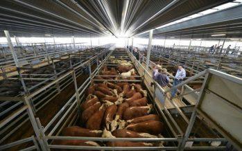 Strong Q1 Retail Sales, Dairy Prices Keep Kiwi Bullish