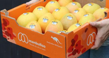Australia's Manbulloo to Track Mango Produce Using Blockchain